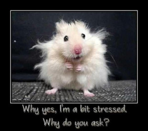 funny demotivational posters, stressed