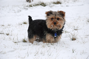cocaine, cute, dog, funny, snow