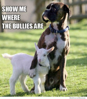 show-me-where-the-bullies-are