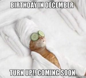 wait on it birthday in december turn up pampered cat meme birthday ...