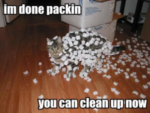 Funny-Cat-Pictures-animal-humor-935493_500_375