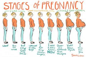 pregnancystages