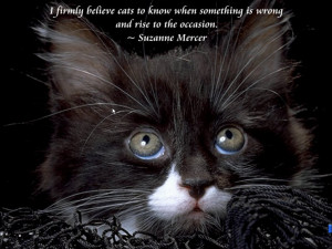 cute-kitten-quotes-wallpaper-cats-and-quotes-scenic-reflections ...