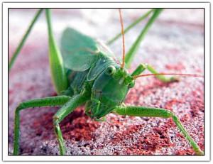 grasshopper like these http://jancology.com/blog/archives/grasshopper ...