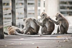 Teamwork by Gregorius Pratomoadji - Animals Other Mammals ( monkey ...