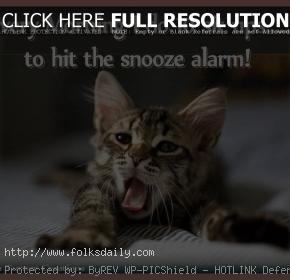 funny-quotes-about-cats-3