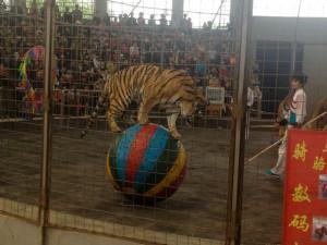 Animal abuse in Shijiazhuang Zoo