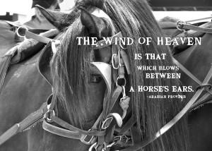 Carriage Horse Quote Photograph