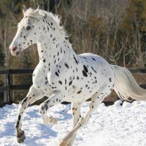 Amazing Horse