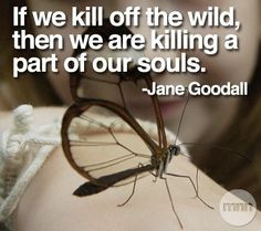 jane goodall quotes | Jane Goodall