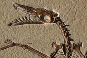 Dinosaur Carcass Alex Dnaj