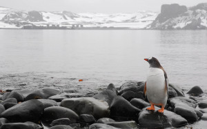 inspirational penguin- inspire others