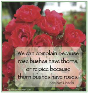 Lincoln Rose Quote