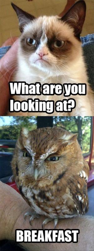 Grumpy Cat Quotes Funny