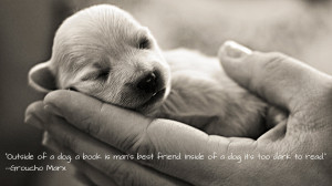 Cute Puppies With Quotes Hd