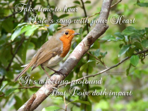 Take Time To Hear The Birds Sing.