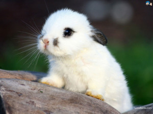 Wallpapers / Animals / Rabbits