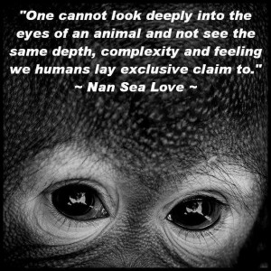... animal and not see the same depth, complexity and feeling we humans