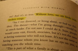 ... we are birds with broken wings. - Tuesdays with Morrie by Mitch Albom