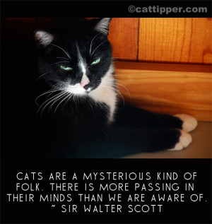 Famous Cat Quote: Sir Walter Scott