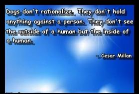 Quote-Cesar-Millan-Pitbull-Videos.jpg