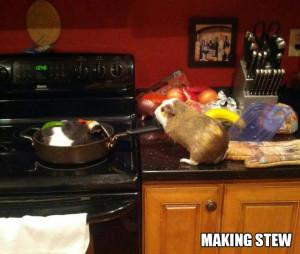 Stuff My Guinea Pig Does