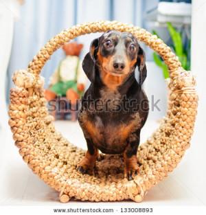 Happy Basset Hounds Puppies