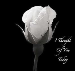 Rose Flower Love Quote Rose flower love quote