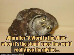 stupid funny quotes. Stupid Funny Quotes. funny