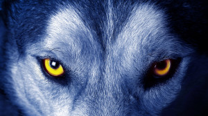 Soul of wolf