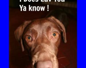 Chocolate Labrador Valentine Birthd ay Card ...