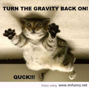Cute Animals With Funny Sayingscute Animal Pics With Funny Sayings ...