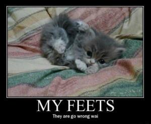 babykatze beine füße kätzchen niedlich süß verdreht verkehrt
