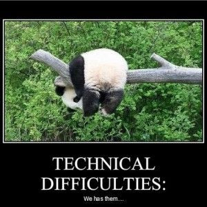 Funny Quotes about Panda