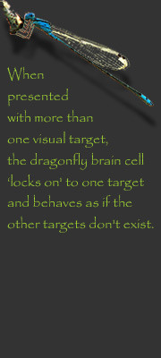 Dragonfly Quotes and Sayings