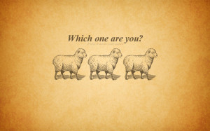 Funny Sheep Desktop Wallpapers and Backgrounds