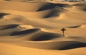 have always loved the desert. One sits down on a desert sand dune ...