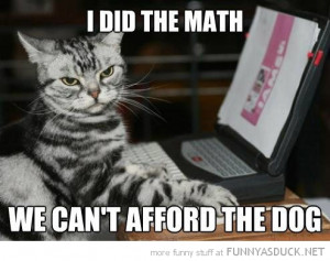 cat lolcat animal laptop computer did math can't afford dog funny pics ...