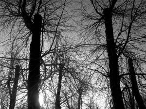 Winter Trees Quotes