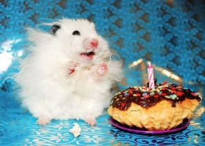 adorable, animal, birthday, cake, candle, chocolate, clapping, color ...