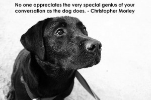 ... post with some of my favorite dog quotes i think that quotes are a
