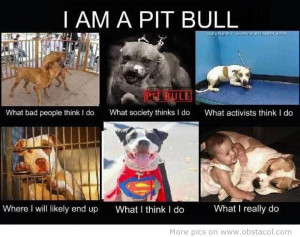 National Pit Bull Awareness Post