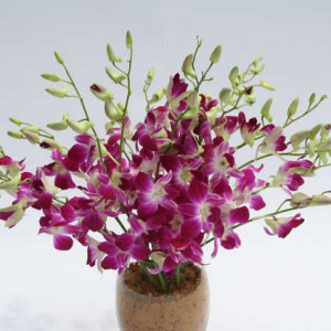 Buy And Send Flowers Online