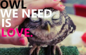 cute, love, owl, photography, quote