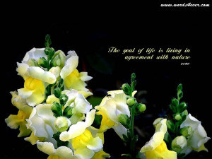 beautiful quotes 04 beautiful quotes 05 beautiful quotes 06 beautiful ...