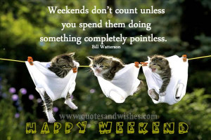 ... Kittens, Funny Animal Photos, Big Girls, Happy Weekend, Animal Funny