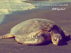 Cute Turtle Quotes