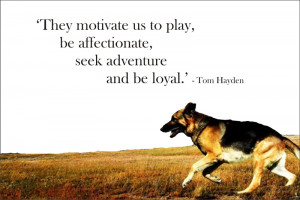 Faithful Dog Quotes http://www.signscene.co.za/pet_quotes_dogs.html