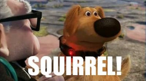 Disney Up! Squirrel! One of my all time favorite movie lines right ...