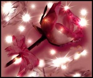 www-fanwave-net_flowers-roses-wallpaper-flower-images-44.jpg